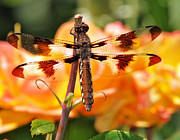 Kenneth Haley - Dragonfly in the Rose Garden