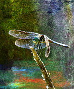 Layered Framed Prints - Dragonfly  Framed Print by J Larry Walker