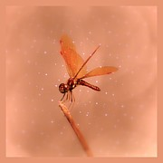 Kim Doran - Dragonfly Magic 3