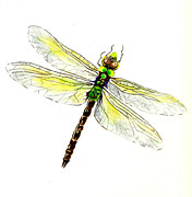 Dragonfly Art Framed Prints - Dragonfly Framed Print by Michael Vigliotti