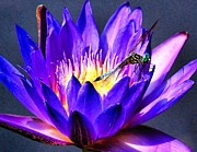 Dragon Fly Posters - Dragonfly on a Water Lilly Poster by Nick Zelinsky