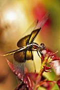 Kenneth Haley - Dragonfly on Gold