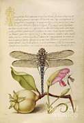 Getty Research Institute - Dragonfly-Pear-Carnation And Insect