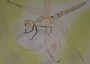 Dragonfly Visitor Print by Marcia Weller-Wenbert