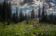 Mazama Posters - Dramatic Rainier Flower Meadows Poster by Mike Reid