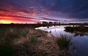 Early Morning Sun Photos - Dramatic Sunrise Over Swamp by Olha Rohulya