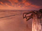 Dry Lake Prints - Dramatic sunset nature scenery of driftwood on a shore Print by Oleksiy Maksymenko