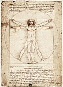 Insides Framed Prints - Drawing By Leonardo Da Vinci. Vitruvian Framed Print by Everett