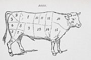 Farm Animals Drawings Posters - Drawing of a bullock marked to show eighteen different cuts of meat Poster by English School