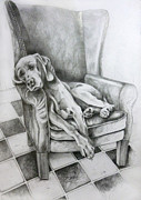 Sleeping Dog Drawings Prints - drawing of a Weimaraner dog sleeping on a chair Print by Gill Bustamante