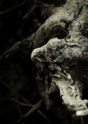 Tree Roots Photos - Dream Chanter by Rebecca Sherman