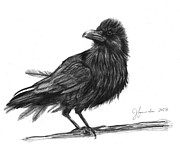 Blackbird Drawings Metal Prints - Dream Crow Metal Print by J Ferwerda