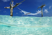 Sean Davey Acrylic Prints - Dream Hammock. Acrylic Print by Sean Davey