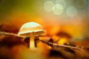 Double Exposure Framed Prints - Dream Mushroom Framed Print by Dirk Ercken