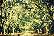 Live Oak Trees Posters - Dream of the South Poster by Carol Groenen
