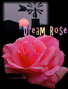Dean Gleisberg - Dream Rose 3