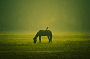 Grazing Horse Originals - Dream by Sagar Lahiri