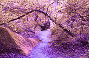 Swank Photography - Dream Walking