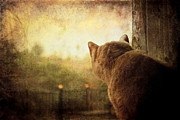 Domestic Cats Digital Art - Dreamer by Ellen Cotton
