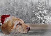 Christmas Dogs Digital Art Prints - Dreamin of a White Christmas 2 Print by Lori Deiter