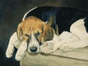 Foxhound Framed Prints - Dreaming of Cubbing Framed Print by Anita Baarns