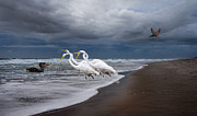 Grey Clouds Posters - Dreaming of Egrets by the Sea II Poster by East Coast Barrier Islands Betsy A Cutler