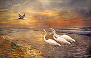 Early Digital Art Prints - Dreaming of Egrets by the Sea IV Print by East Coast Barrier Islands Betsy A Cutler