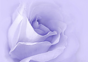 Purple Rose Prints - Dreaming of Lavender Roses Print by Jennie Marie Schell