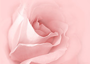 Pale Pink Posters - Dreaming of Pink Roses Poster by Jennie Marie Schell