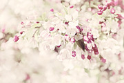 Photographic Art Metal Prints - Dreaming of Spingtime Blossom Metal Print by Natalie Kinnear