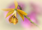 Sabrina L Ryan - Dreaming Orchids