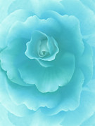 Begonias Posters - Dreaming Teal Begonia Floral Poster by Jennie Marie Schell