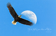 Bald Eagle Photo Framed Prints - Dreams Framed Print by Everet Regal