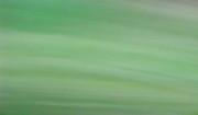 TONY GRIDER - Dreams in Green