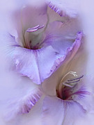 Gladiolas Prints - Dreams of Purple Gladiola Flowers Print by Jennie Marie Schell
