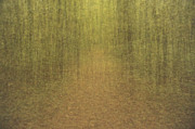 Pathway Digital Art Originals - Dreamscape - forest path by Tomasz Wieja
