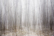Photomanipulation Originals - Dreamscape - winter forest by Tomasz Wieja