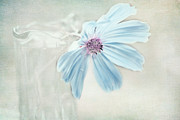 Baby Blue Colors Prints - Dreamy Blue Flower Print by Bonnie Bruno