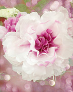 Photographs Of Flowers Prints - Dreamy Cottage Shabby Chic Pink and White Soft Ethereal Fluffy Rose Floral Art Impressionistic  Print by Kathy Fornal
