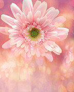 Dreamy Cottage Shabby Chic Pink Yellow Mango Gerber Daisy Flowers  Print by Kathy Fornal