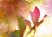 Surreal Art Photos - Dreamy Ethereal Pink Tulip Bokeh Circles by Kathy Fornal
