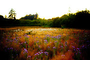 Colourized Photos - Dreamy Feild by Graham Foulkes