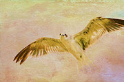 Flying Seagull Art - Dreamy Flight by Deborah Benoit