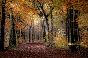 Hugo Bussen - Dreamy forest autumn...