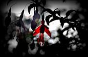 Dreamy Fuchsia Print by Florian Walsh
