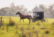 Horse And Buggies Framed Prints - Dreamy Morning Framed Print by Marcia Colelli