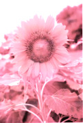 Pink Flower Prints Prints - Dreamy Pink Cottage Chic Surreal Sunflower Print by Kathy Fornal