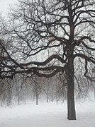 Tina Osterhoudt - Dreamy Prospect Park...