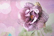 Romantic Roses Photography Photos - Dreamy Purple Impressionistic Romantic Shabby Chic Cottage Purple and Pink Ethereal Floral Art by Kathy Fornal