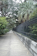 Savannah Architecture Posters - Dreamy Savannah Georgia Street Architecture Rod Iron Gates With Palm Trees  Poster by Kathy Fornal